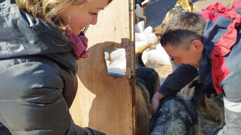 Благотворительная акция «Помоги животным»